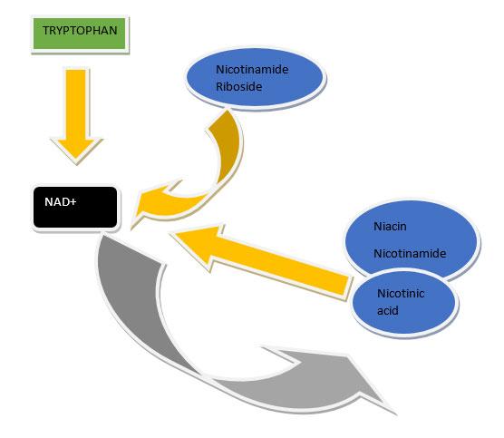 NAD figure 1