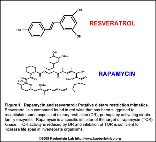 Resveratrol and Rapamycin