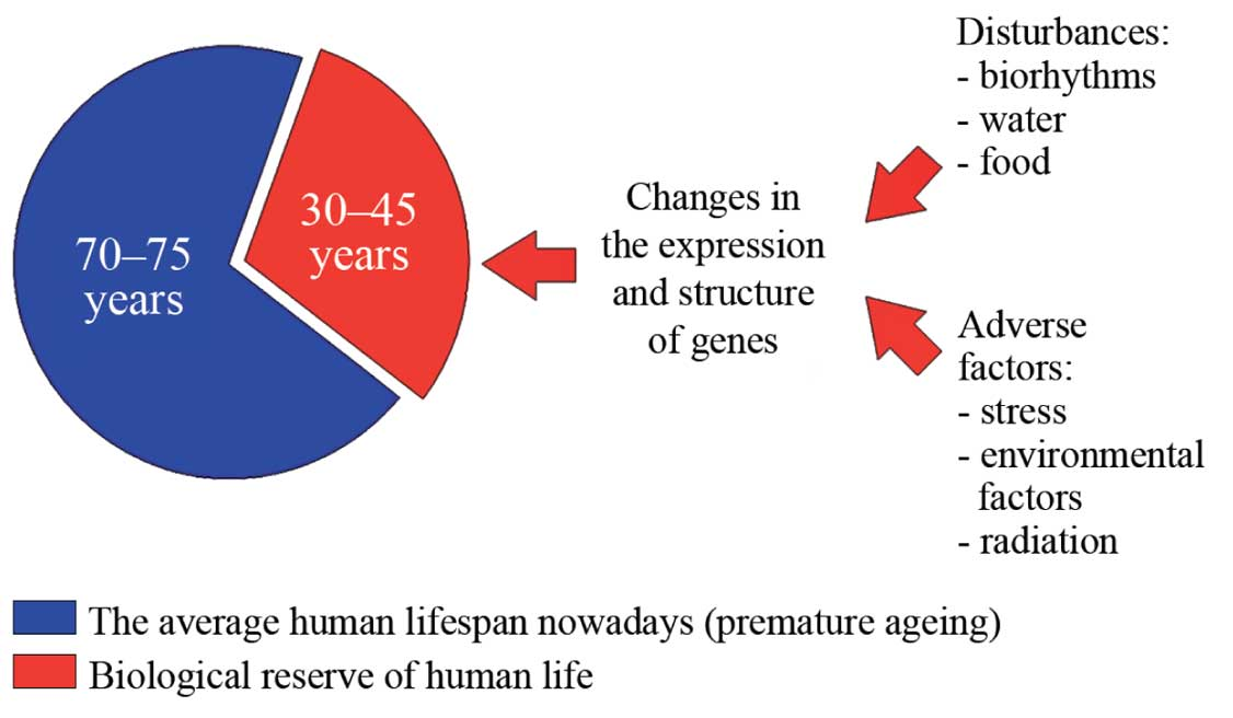 Potential increase in the average human lifespan