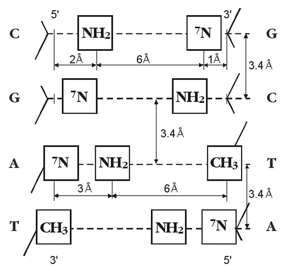 Metric location of functional groups