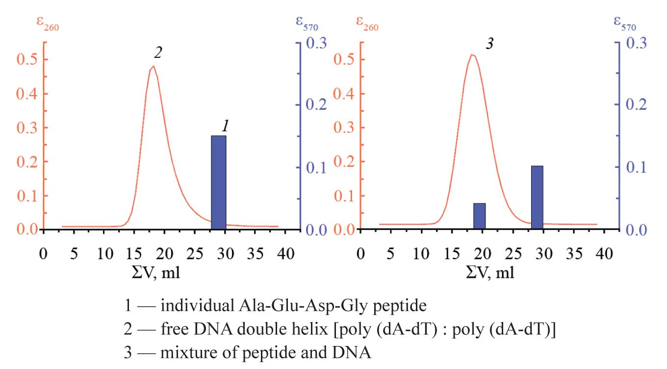 HPLC of peptide and DNA on sefadex G-25