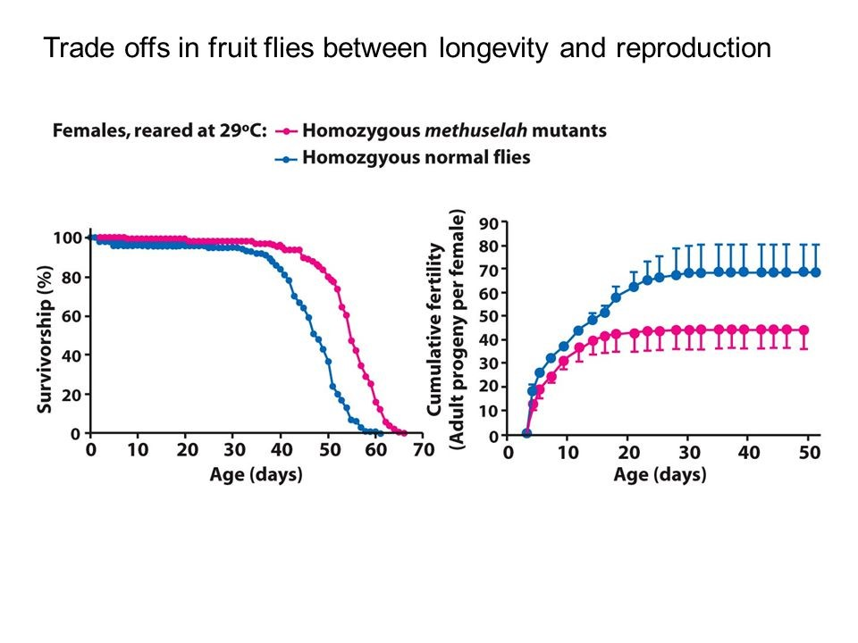 A study of longevity and reproduction in flies: Flies in the red group live longer than those in the blue group (left graph), and also have less offspring (right graph).