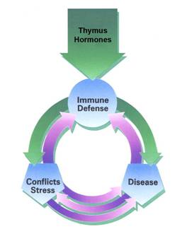 thymus hormones