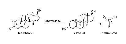 Testosterone and Estradiol